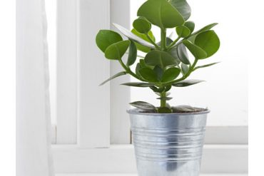 image of ikea socker pot